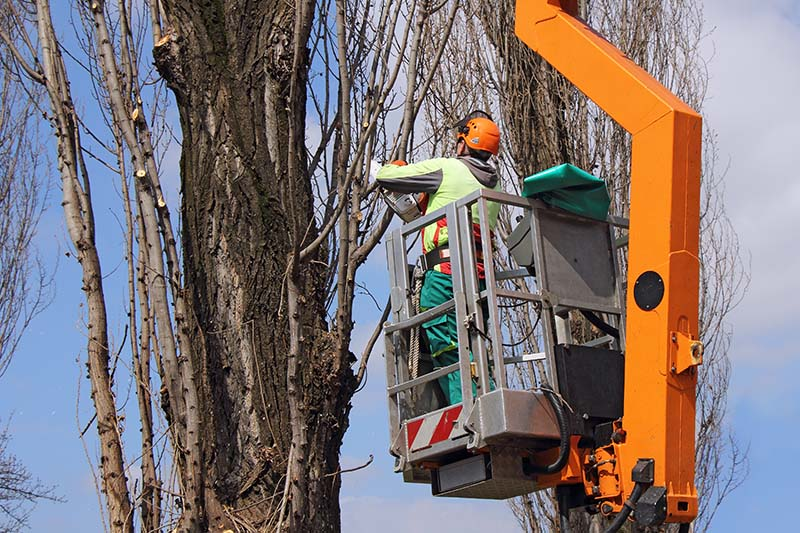 Tree Removal Company