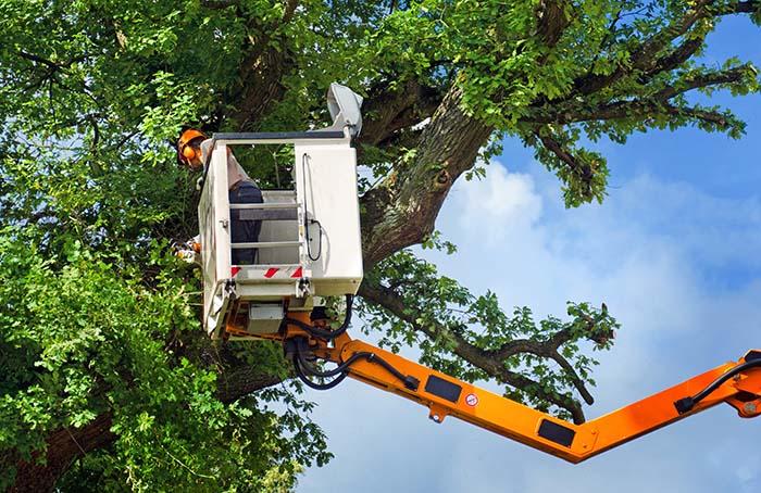 Professional Tree Company