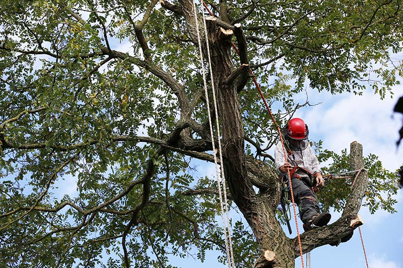 Tree Trimming Costs