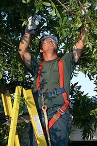 West Virginia Arborists