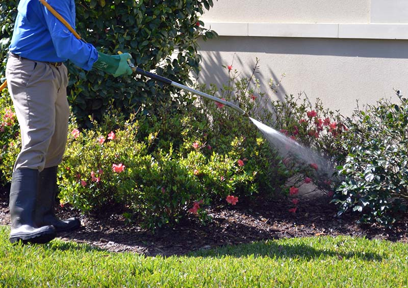 Lawn Insect Spraying